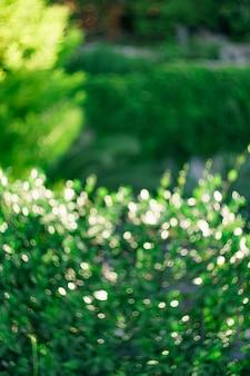 Bokeh vert naturel abstrait couleur ultraverte