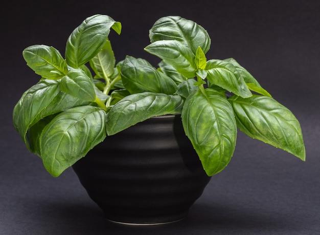 Bol noir avec des feuilles de basilic vert