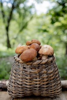 Bolet de champignons sur forêt en bois.