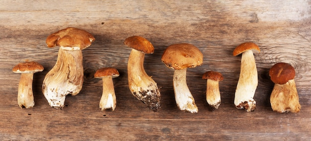 Bolets de champignons crus comestibles sur gros plan vieux bois rétro, vue de dessus