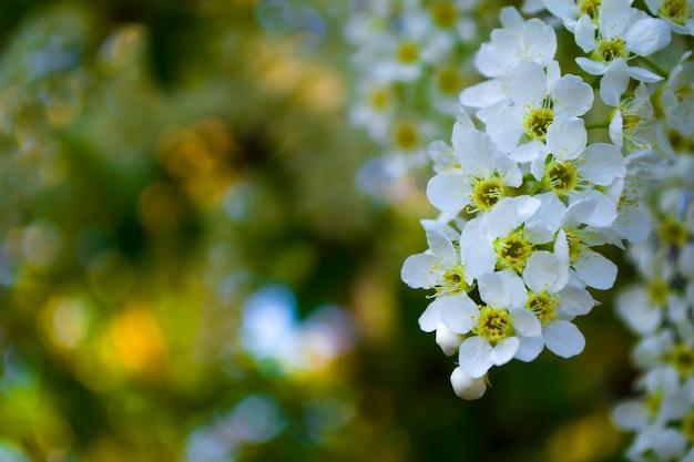 Bonjour carte de printemps fleurs en fleurs sur fond flou