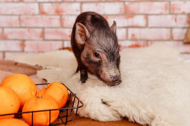 Bonne année, cochon de signe du zodiaque, nouvel an chinois