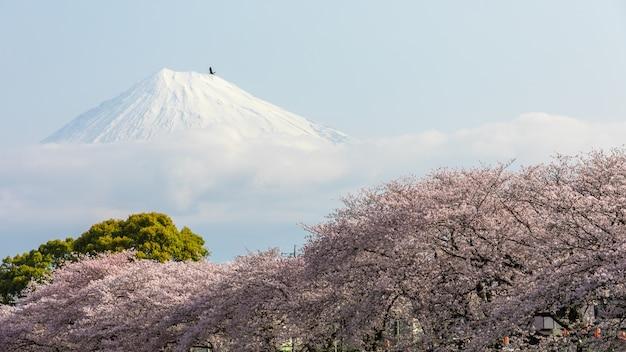 Bonne vue point de repère ryuganbuchi sakura et fond de fuji