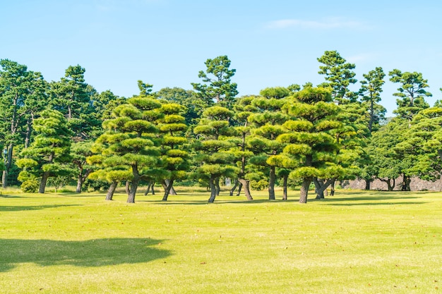 Bonsaï dans le jardin du palais impérial à tokyo