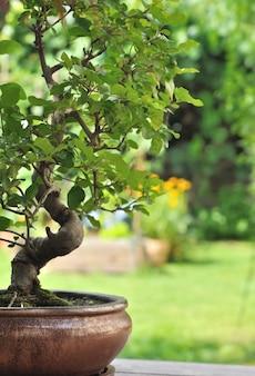 Bonsai en pot dans le jardin