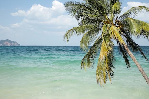 Bord de mer avec des palmiers et une plage