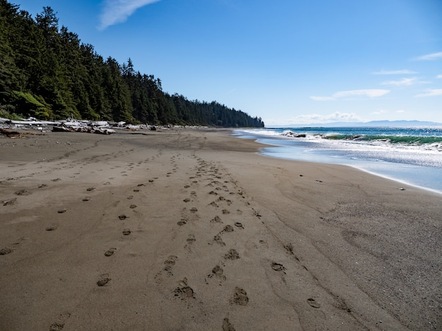 Bord de plage avec des arbres verts et un ciel bleu