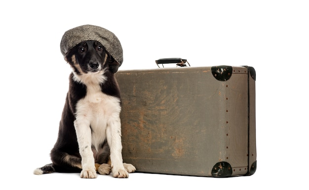 Border collie assis à côté d'une vieille valise