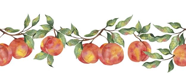Bordure aquarelle avec pêche mûre de fruits avec des branches de feuilles sur fond blanc