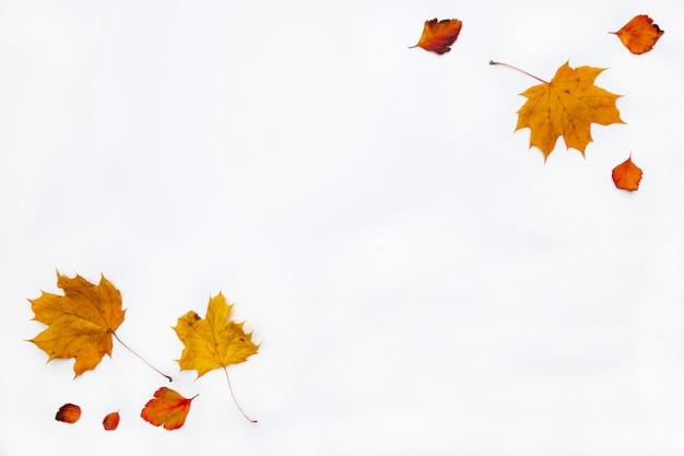 Bordure d'automne faite de feuilles d'automne sur fond blanc. mise à plat, vue de dessus. copiez l'espace pour les promotions et remises saisonnières.