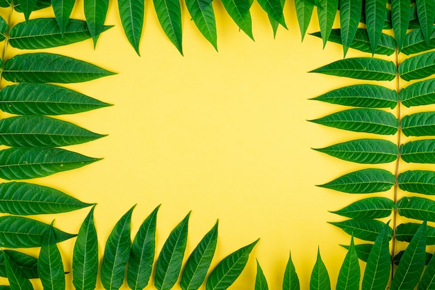 Bordure de cadre abstrait de feuilles vertes tropiques sur mur jaune, copiez l'espace pour le texte