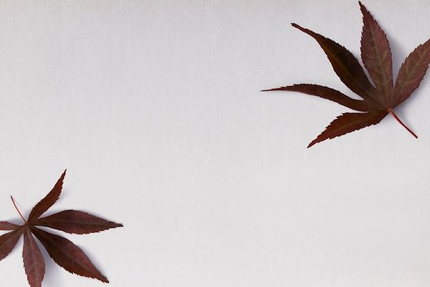 Bordure et cadre botaniques de feuilles séchées