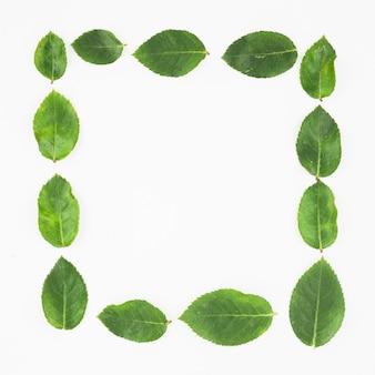 Bordure de cadre faite avec des feuilles vertes sur fond blanc