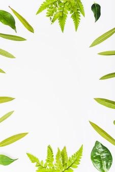 Bordure de feuilles de plantes lumineuses