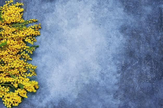 Bordure de fleurs de mimosa sur fond bleu. copiez l'espace, vue de dessus.