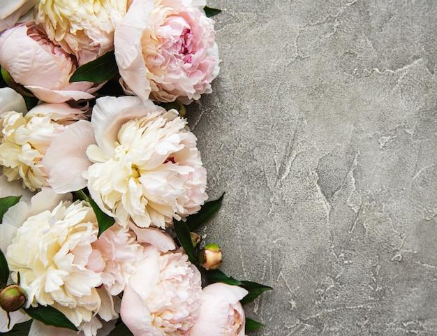 Bordure de fleurs de pivoine rose clair frais avec espace copie sur fond de béton gris, mise à plat.