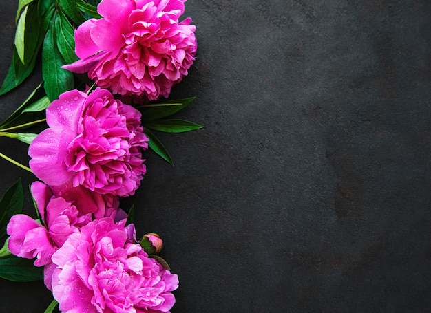 Bordure de fleurs de pivoine rose fraîche avec espace de copie sur une surface noire à plat