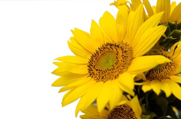 Bordure florale tournesol avec espace copie, festive.