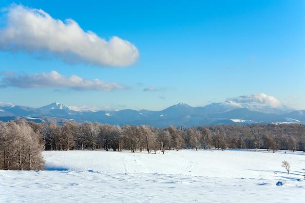 Bordure de forêt de hêtres de montagne d'octobre et première neige d'hiver (mont goverla au loin, ukraine)
