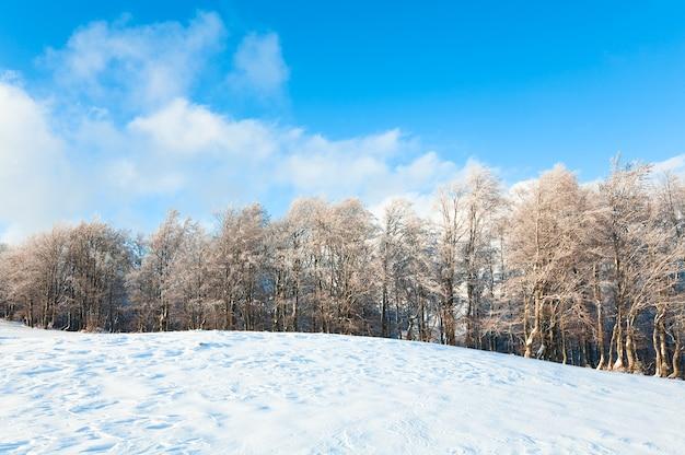 Bordure de forêt de hêtres de montagne d'octobre et première neige d'hiver