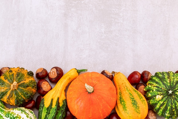 Bordure latérale d'automne de diverses citrouilles et châtaignes décoratives sur fond de béton gris