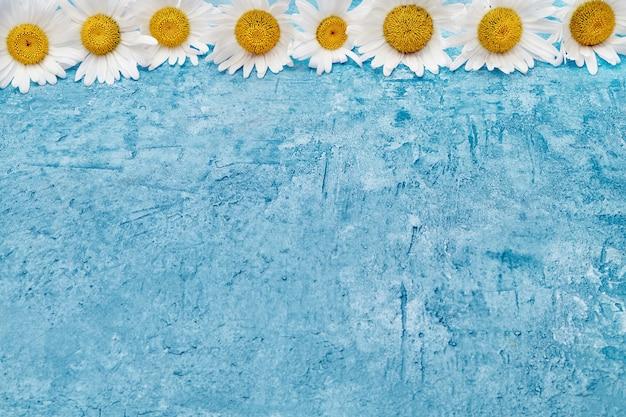 Bordure de marguerite blanche sur fond bleu