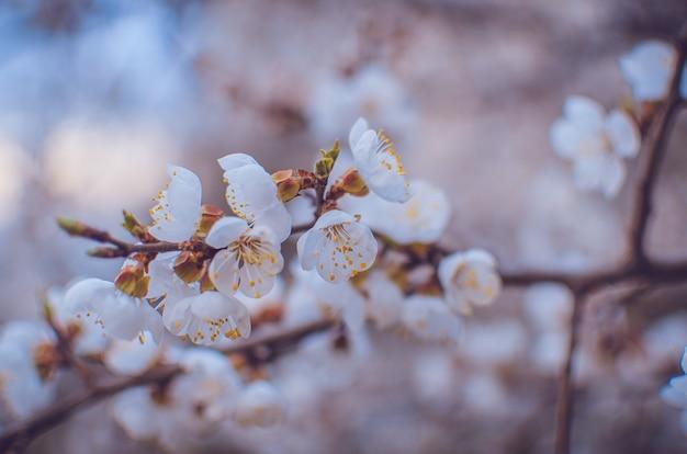 Bordure de printemps ou arrière-plan à la fleur rose