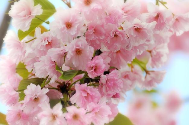 Bordure de printemps ou arrière-plan avec fleur