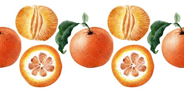 Bordure transparente aquarelle de fruits, de brindilles et de tranches de mandarine