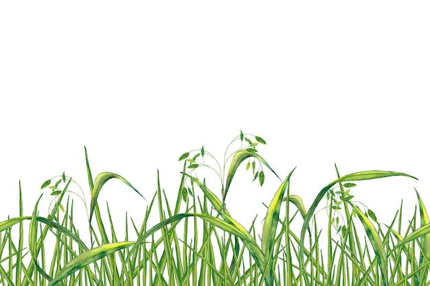 Bordure transparente de plante d'été réaliste. herbe verte fraîche avec des épillets. peinture à l'aquarelle.
