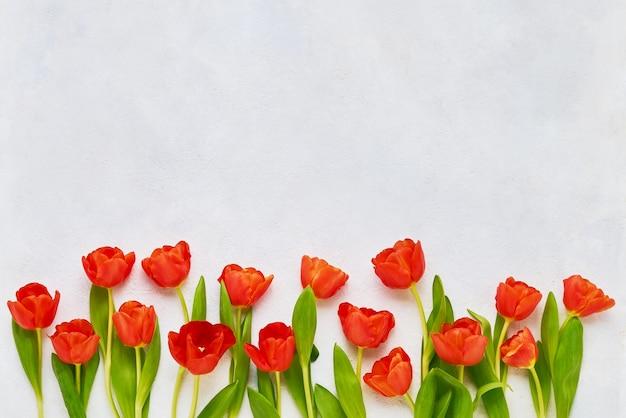 Bordure de tulipes rouges sur fond de béton blanc.