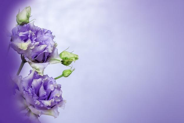 Bordures florales de fleurs fraîches d'eustoma, carte de voeux.