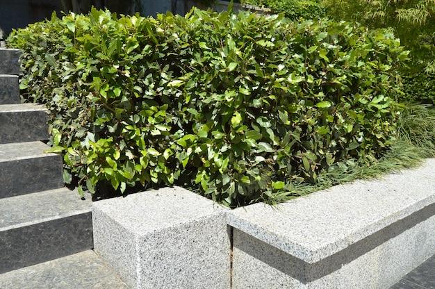 Bordures de marbre avec des escaliers dans le parc avec aménagement paysager
