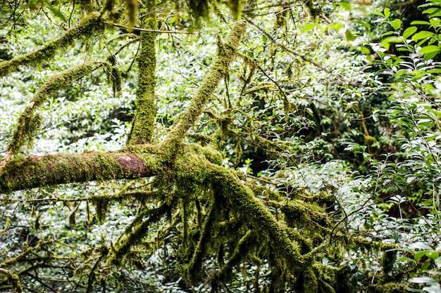Bosquet d'arbres de la forêt naturelle