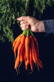 Botte de carottes fraîches sans nettoyage tenu par la main d'un agriculteur.