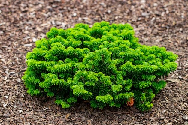 Bouchent les arbustes et les pelouses vertes