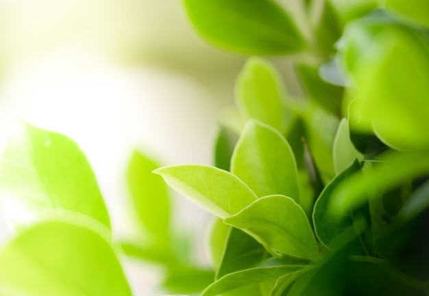 Bouchent la belle vue des feuilles vertes naturelles sur fond de verdure floue