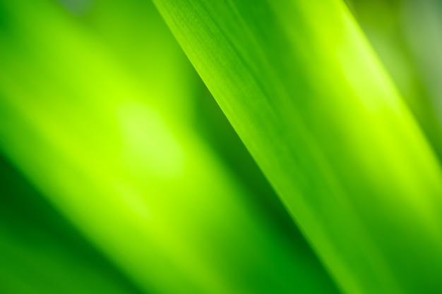 Bouchent la belle vue de la nature verte laisse sur fond d'arbre de verdure floue avec la lumière du soleil dans le parc jardin public.