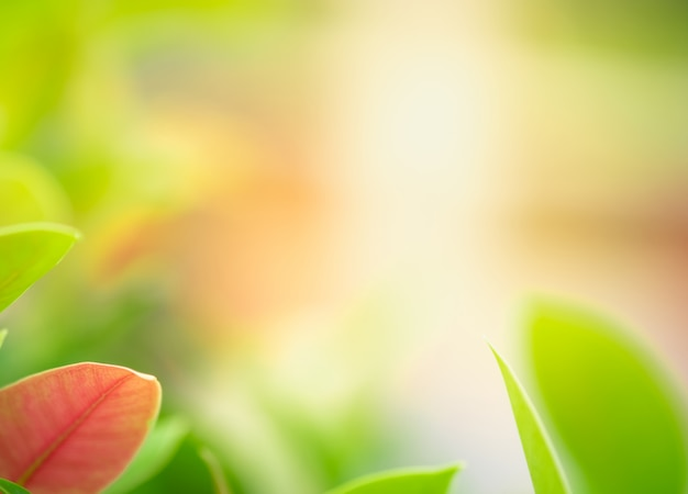 Bouchent la belle vue de la nature verte laisse sur fond d'arbre de verdure floue avec la lumière du soleil