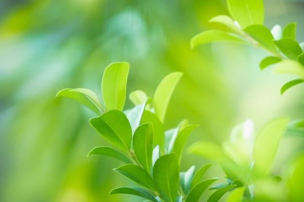 Bouchent la belle vue de la nature verte laisse sur fond d'arbre de verdure floue