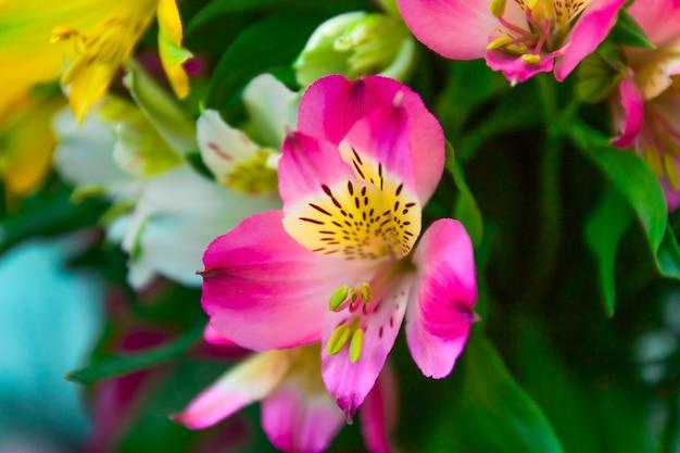 Bouchent le bouquet de fleurs d'alstroemeria