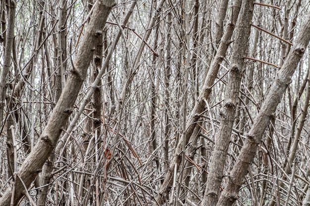 Bouchent la branche d'arbre forêt de mangrove dans la couleur de ton sombre, fond de texture nature