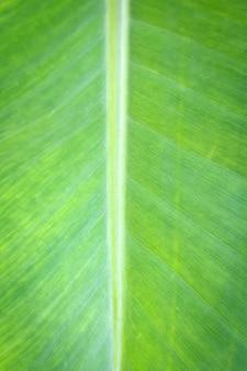 Bouchent les feuilles de bananier sur le fond et la texture.