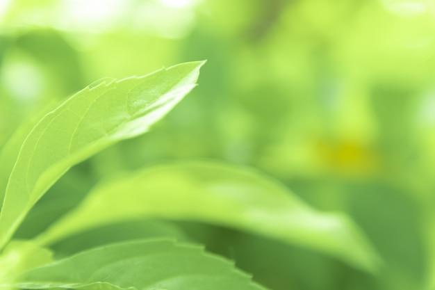 Bouchent les feuilles vertes de vue texture verte nature floue fond dans un parc, jardin ou forêt. utilisez-le pour écrire ou copier dans un espace vide sur un fond de nature verdoyante.