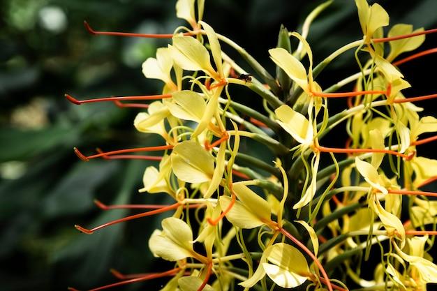 Bouchent une fleur jaune exotique avec un arrière-plan flou