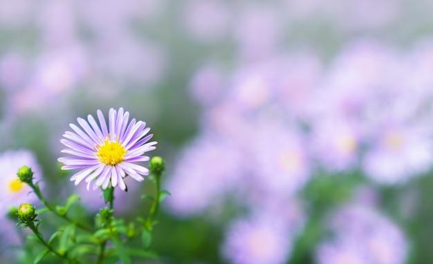 Bouchent la fleur violette dans le champ à la lumière du jour