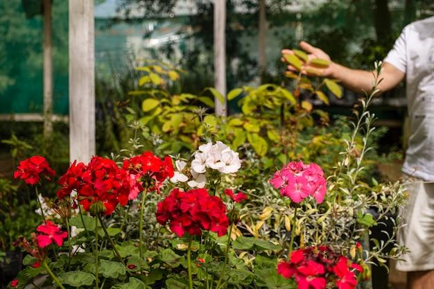 Bouchent les fleurs dans le jardin