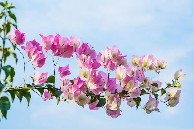 Bouchent les fleurs roses.