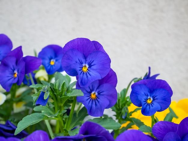 Bouchent les fleurs violettes dans la journée ensoleillée