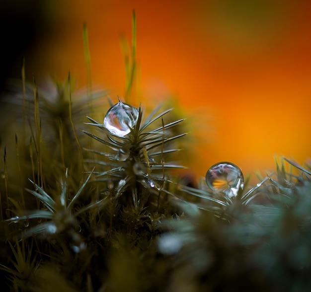 Bouchent le fond d'été nature avec des gouttes d'eau de pluie ou de rosée des plantes sauvages de la forêt
